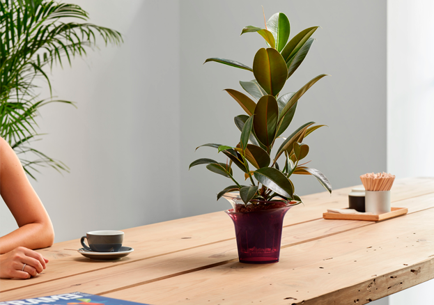 How to decorate your house with plants: tips and tricks